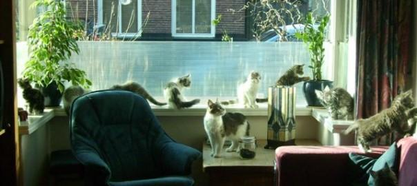 Maine Coon Ypsilon Clan  kittens