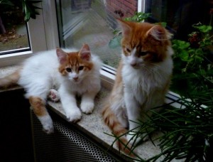 bg-2560px-breed_cattery-150x150